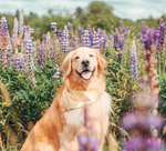 10 Cute Dogs on Instagram