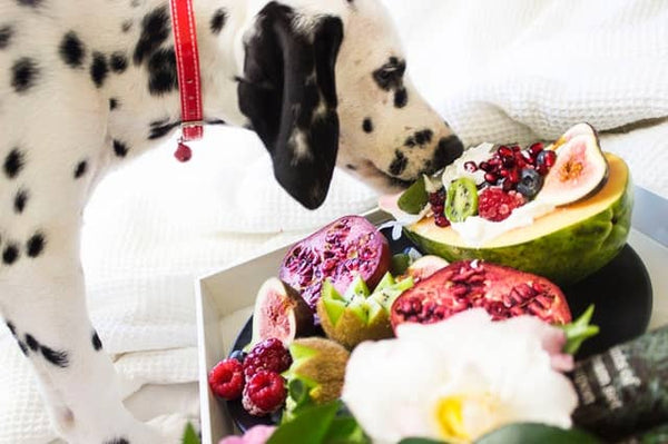 Dog eating healthy fruit and vegetables