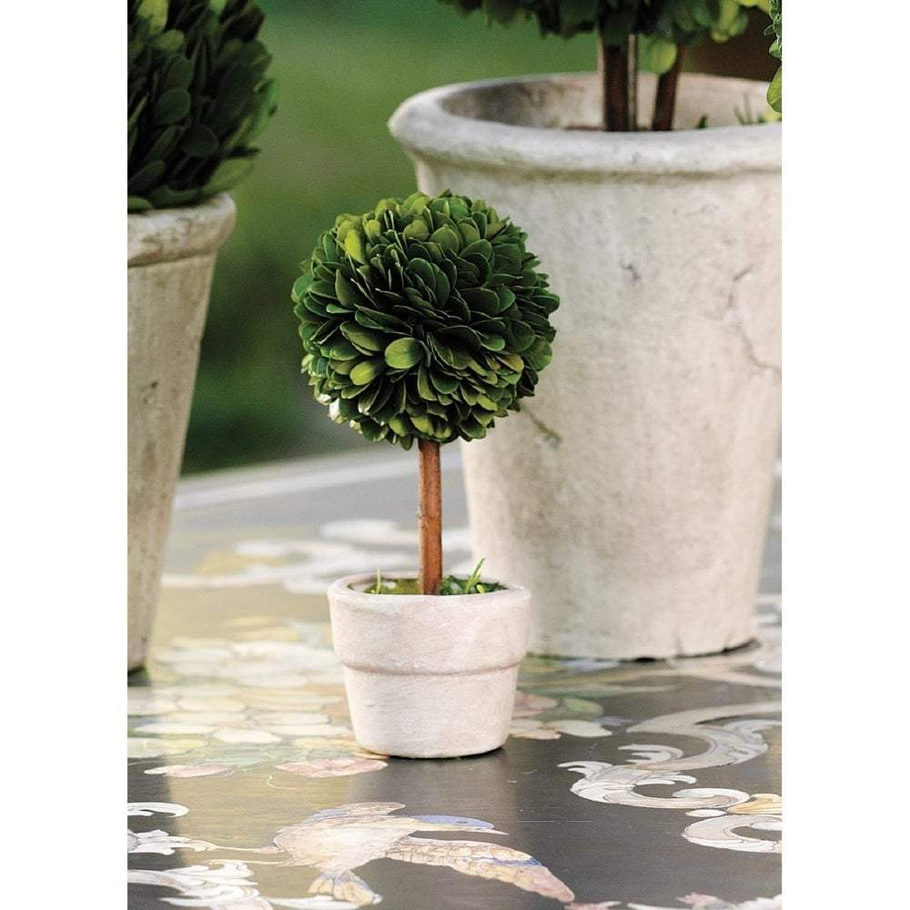 Mini Preserved Boxwood Topiary