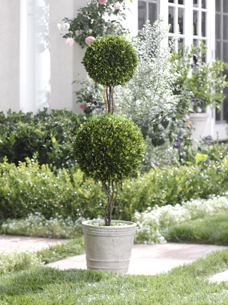 Double-Ball Boxwood Topiary