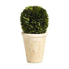 Large Preserved Boxwood Topiary