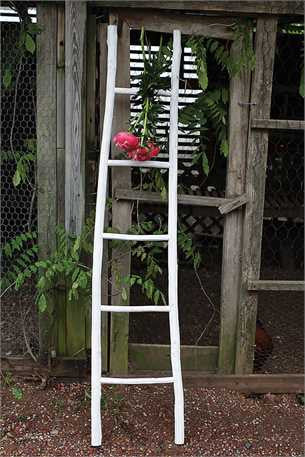 White Wood Ladder - Waiting On Martha - 2