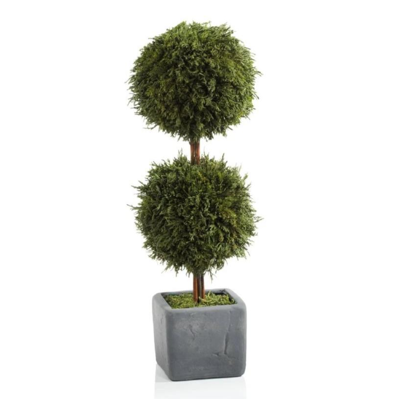 Cypress Round Double Topiary