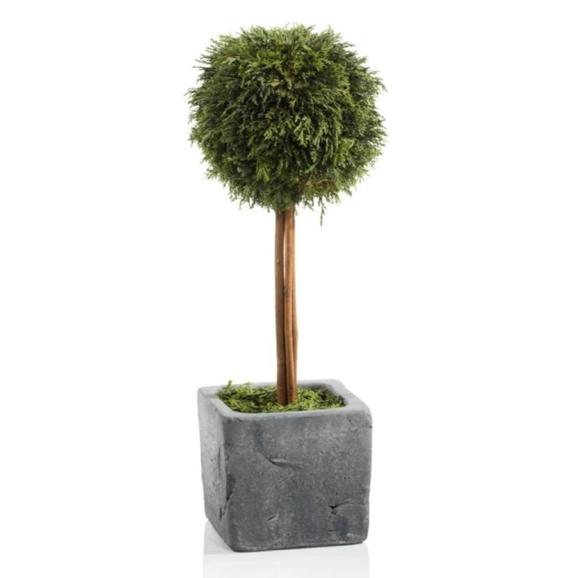 Cypress Round Topiary, Large