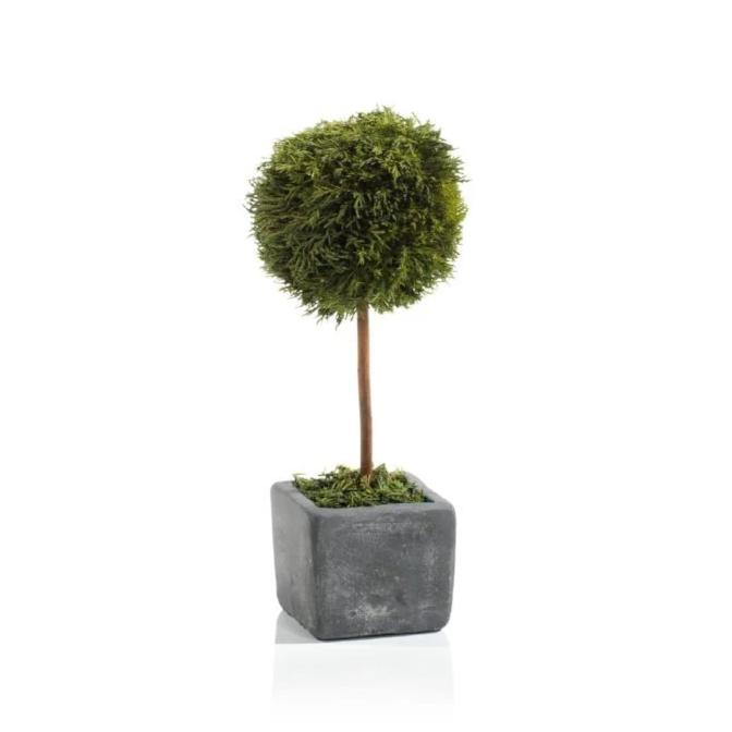 Cypress Round Topiary, Medium