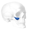 Implantech ePTFE-Coated Binder Submalar® Style II Facial Implant (Sold in Pairs)