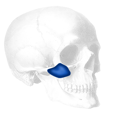 Implantech Terino Malar Shell® Implant (Sold in Pairs)