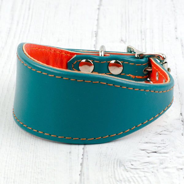 Colour Contrast Italian Greyhound Designer Leather Collar