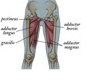 Stretching the Adductors is Critical to Dance and Sports ...