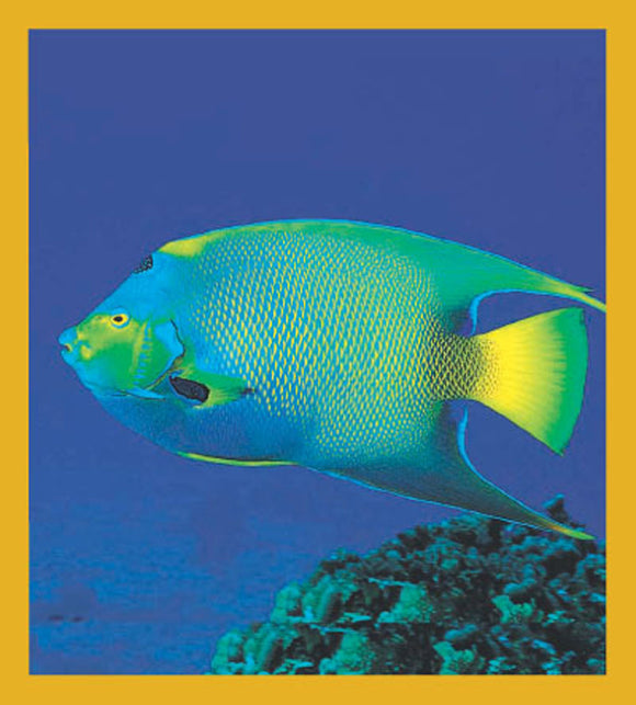 SKU : 00023 - Queen Angelfish - Magnetic Bookmark