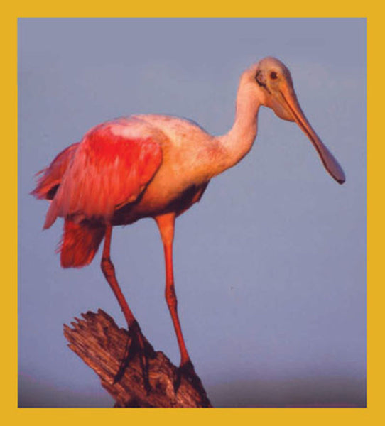 SKU : 00047 - Spoonbill on Branch - Magnetic Bookmark