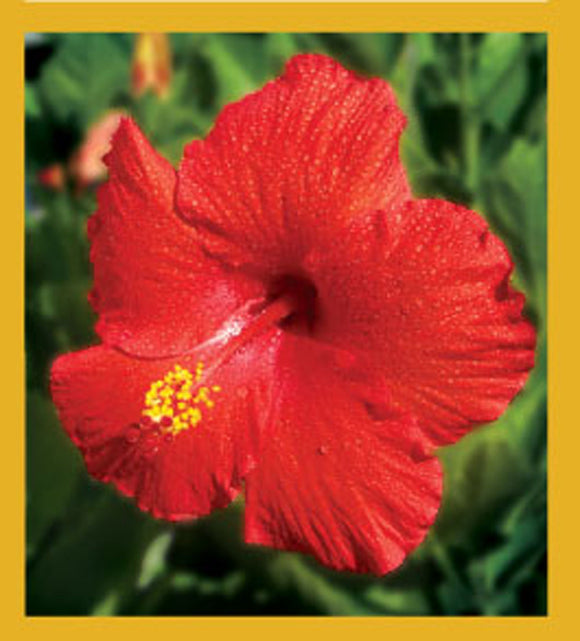 SKU : 00065 - Red Hibiscus - Magnetic Bookmark