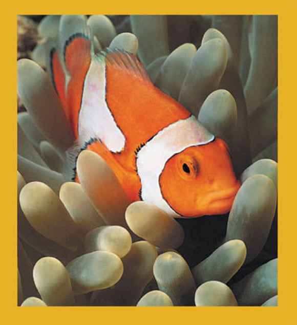SKU : 00070 - Clownfish - Magnetic Bookmark