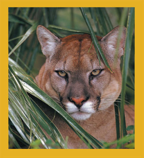 SKU : 00076 - Florida Panther - Magnetic Bookmark