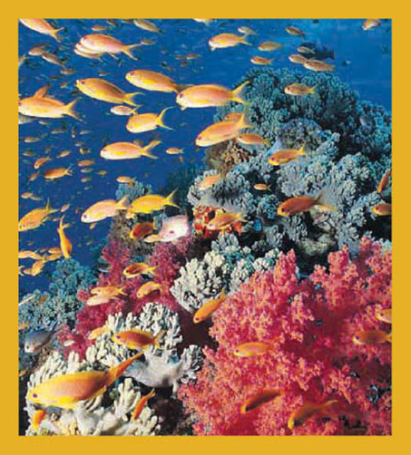 SKU : 00092 - Coral Reef - Magnetic Bookmark