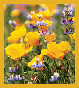 SKU : 00223 - California Poppies - Magnetic Bookmark