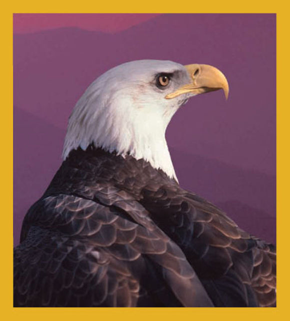 SKU : 00620 - Bald Eagle - Magnetic Bookmark