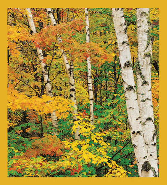 SKU : 01212 - Birch & Maple Trees in the Fall - Magnetic Bookmark