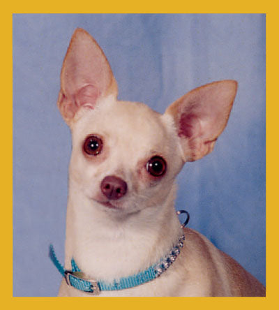 SKU : 01700 - Chihuahua- Peppita - Magnetic Bookmark