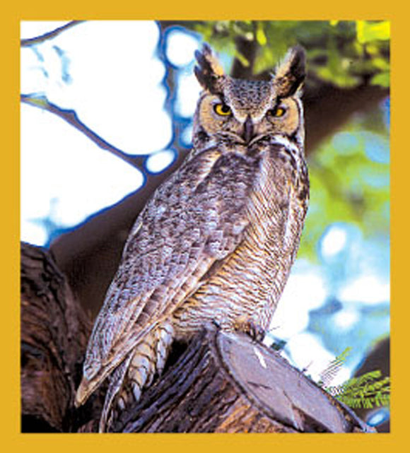 SKU : 06195 - Great Horned Owl - Magnetic Bookmark