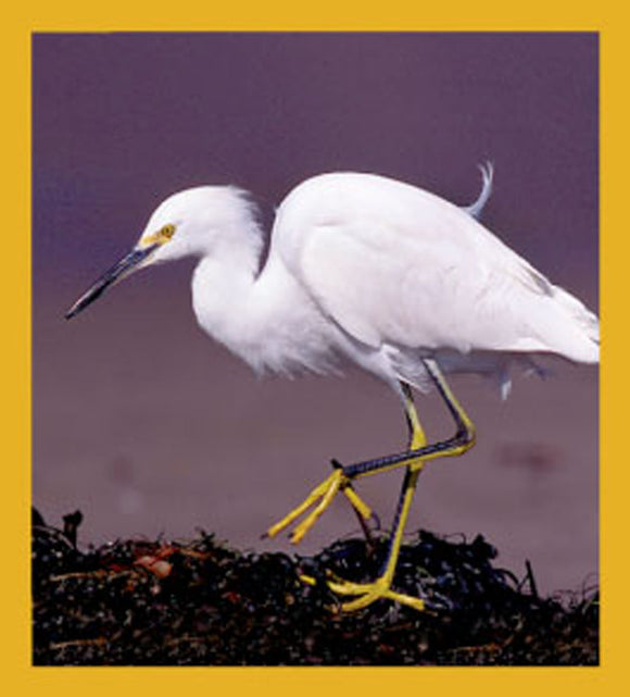 SKU : 06206 - Snowy Egret - Magnetic Bookmark