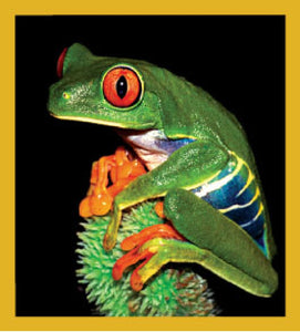 SKU : 06269 - Red-Eyed Tree Frog - Magnetic Bookmark
