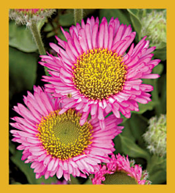 SKU : 06315 - Pink Daisy - Magnetic Bookmark
