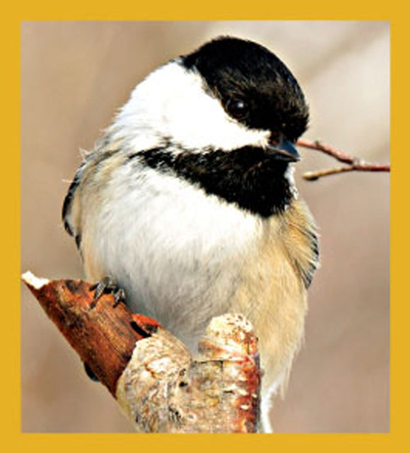 SKU : 06432 - Black-capped Chickadee - Magnetic Bookmark