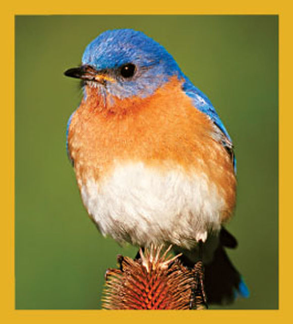SKU : 06450 - Bluebird on Thistle - Magnetic Bookmark