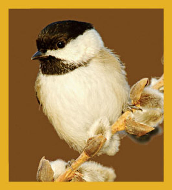 SKU : 06453 - Black-capped Chickadee - Magnetic Bookmark
