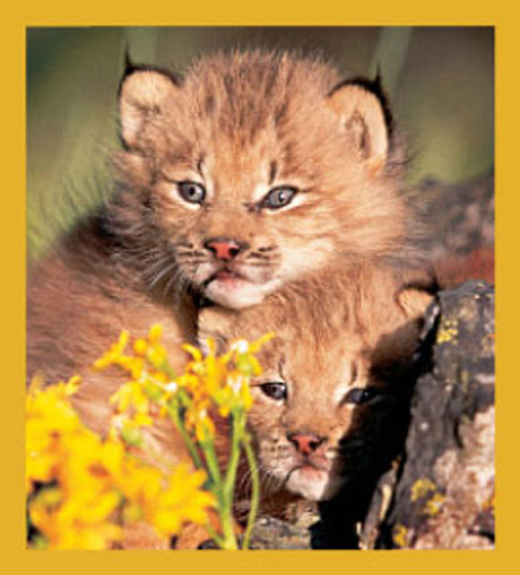 SKU : 06481 - Cubs in the Wild - Magnetic Bookmark