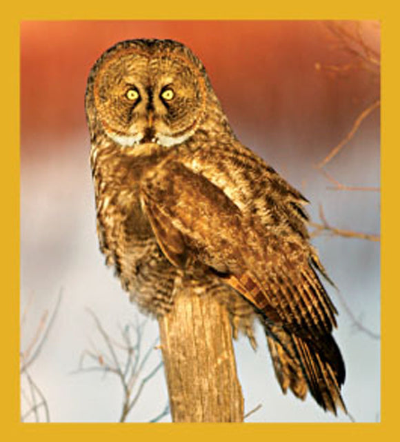SKU : 06488 - Great Grey Owl - Magnetic Bookmark