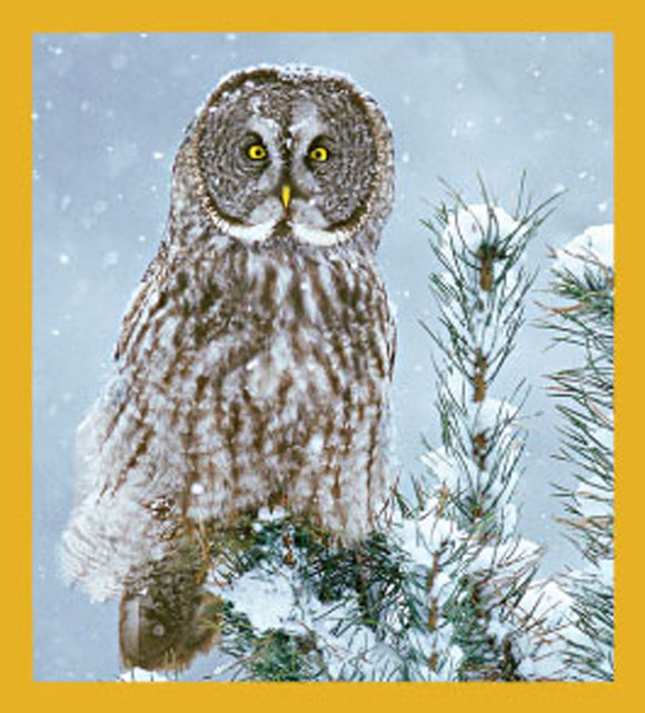 SKU : 06491 - Great Grey Owl - Magnetic Bookmark