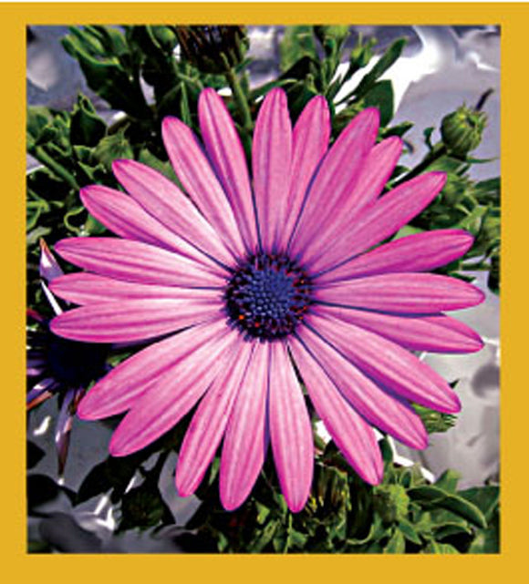 SKU : 06519 - Pink Daisy - Magnetic Bookmark