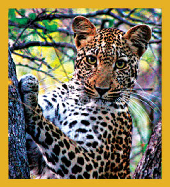 SKU : 06589 - Leopard - Magnetic Bookmark