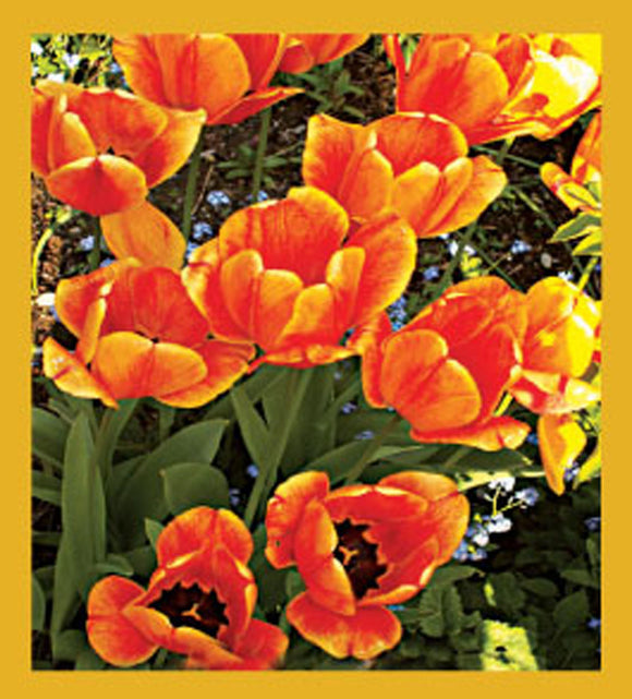 SKU : 06601 - I Love Tulips! - Magnetic Bookmark