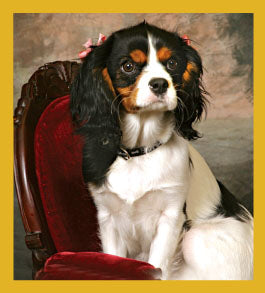 SKU : 06740 - King Charles Spaniel - Magnetic Bookmark