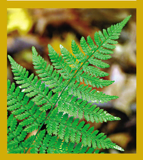 SKU : 06741 - Fern - Magnetic Bookmark