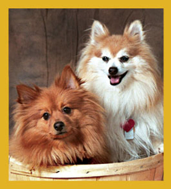 SKU : 06752 - Pomeranians - Magnetic Bookmark