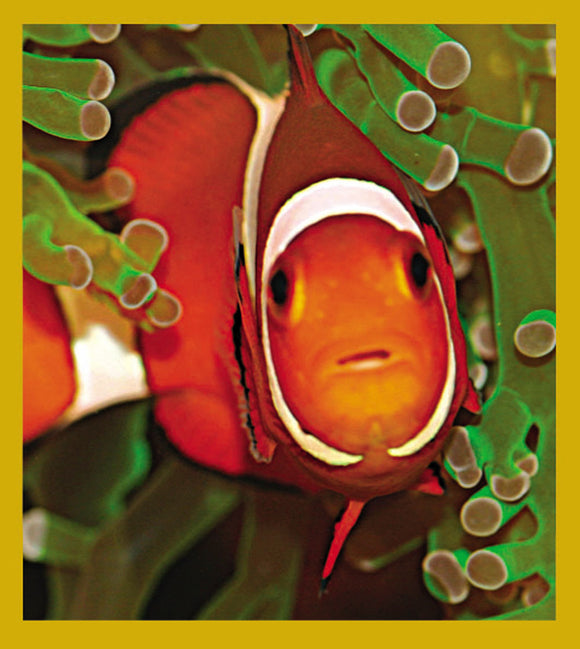 SKU : 06763 - Clownfish & Anemone - Magnetic Bookmark