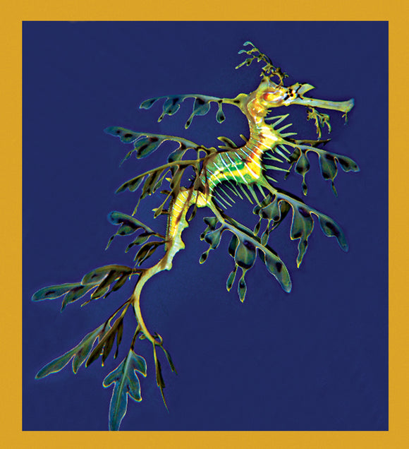 SKU : 06837 - Leafy Sea Dragon - Magnetic Bookmark