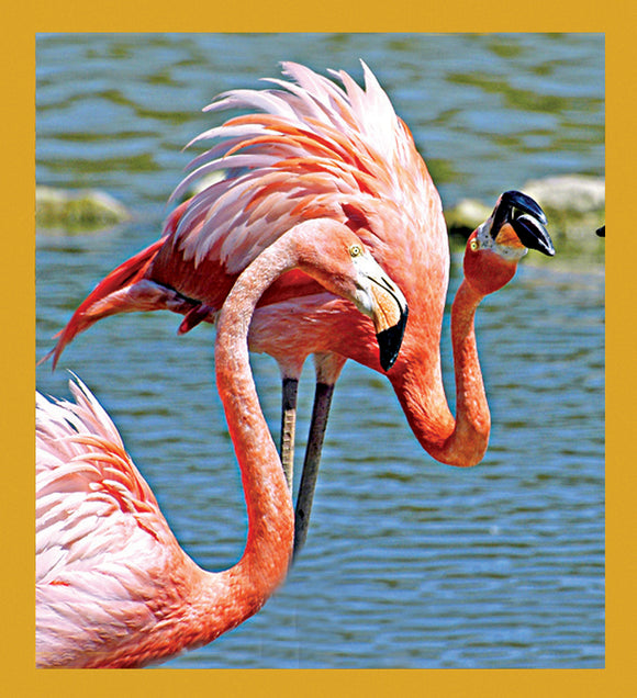 SKU : 06864 - Flamingos - Magnetic Bookmark
