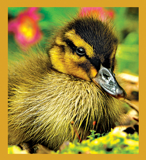 SKU : 06870 - Duckling - Magnetic Bookmark