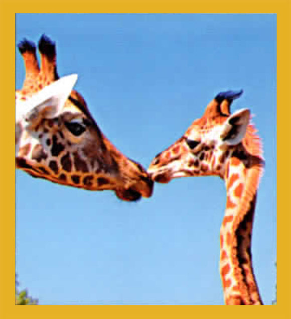 SKU : 06872 - Giraffes - Magnetic Bookmark