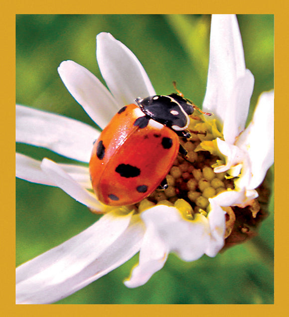 SKU : 06876 - Ladybug on Daisy - Magnetic Bookmark