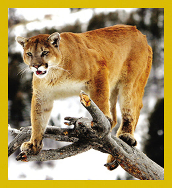 SKU : 07112 - Mountain Lion - Magnetic Bookmark