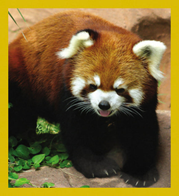 SKU : 07154 - Red Panda - Magnetic Bookmark
