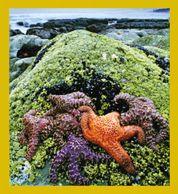 SKU : 07245 - Colorful Starfish - Magnetic Bookmark