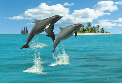 SKU : 20311 - Dolphins - Motion Postcard