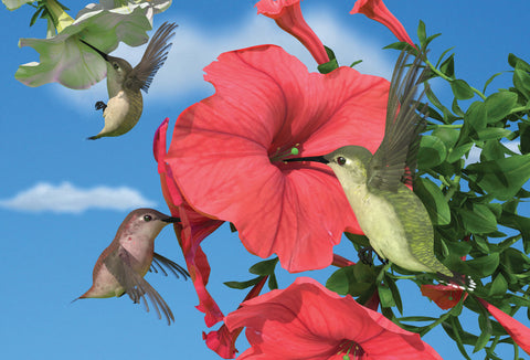 SKU : 20313 - Hummingbirds - Motion Postcard